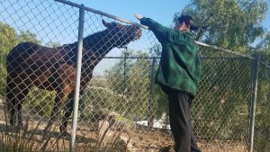 Daisy Taylor enjoys horse encounter